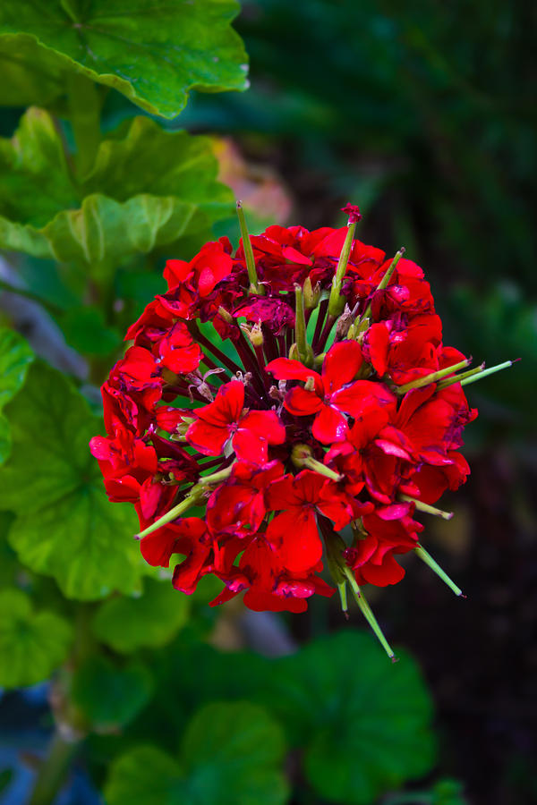 Florist Photograph - Red Blossom by Nadya Ost