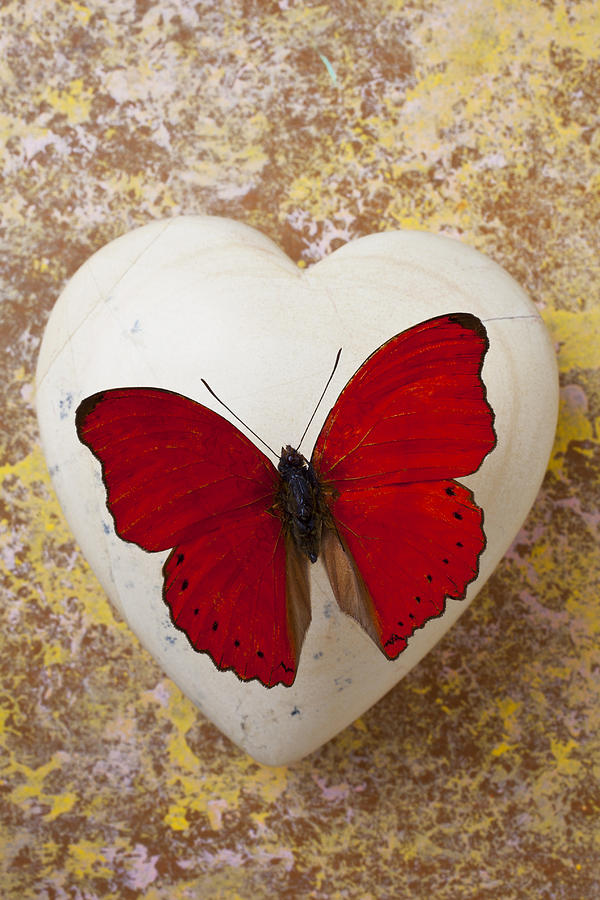 Red Butterfly On White Heart Photograph By Garry Gay