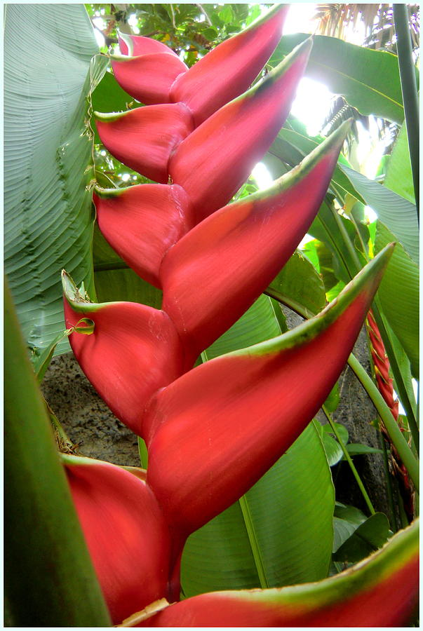 Botanical Photograph - Red Claw by Mindy Newman