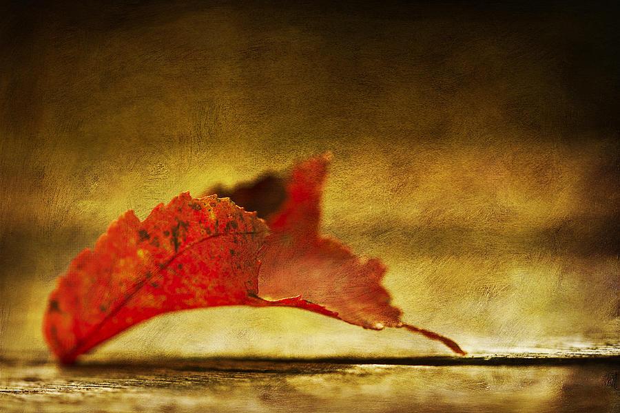 Lief Photograph - Red by Dmitriy Mirochnik