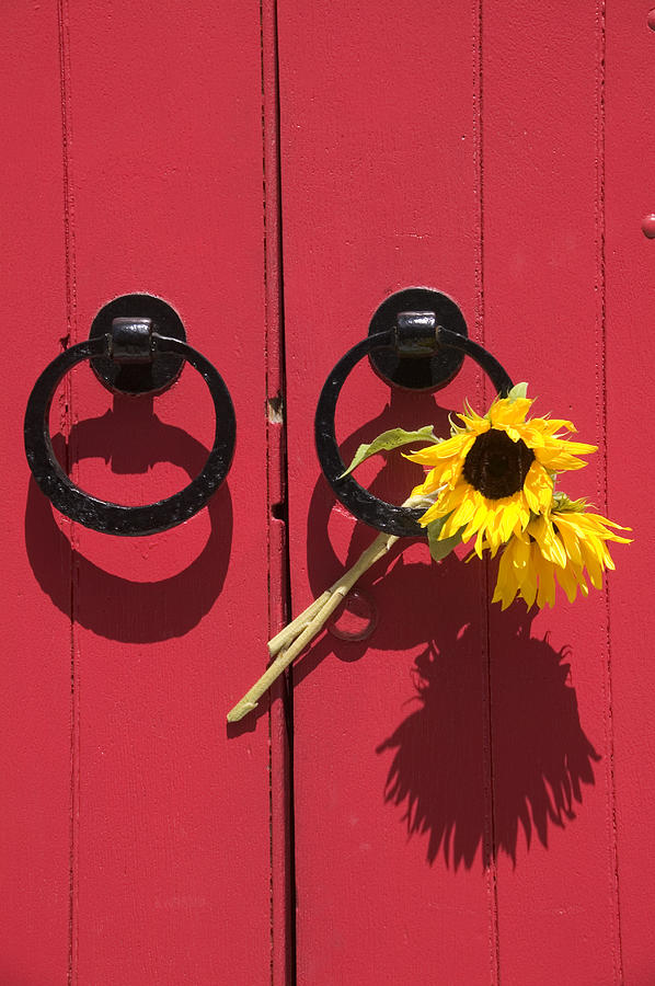 Red Photograph - Red Door Sunflowers by Garry Gay