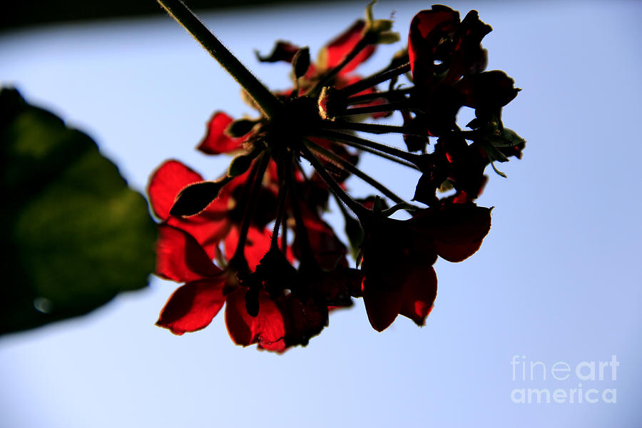 Flowers Photograph - Red Dress  by Melissa  Hardiman