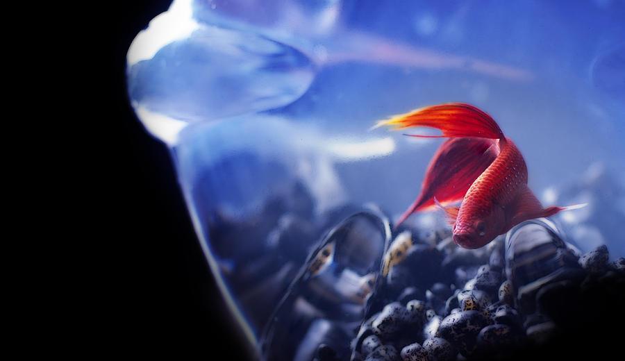 Fish Pyrography - Red Fish by Thomas Kessler