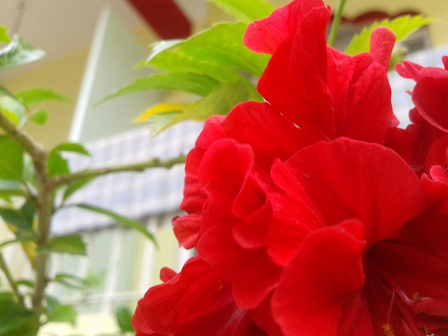 Red Photograph - Red Flower by Chetan Ranjan