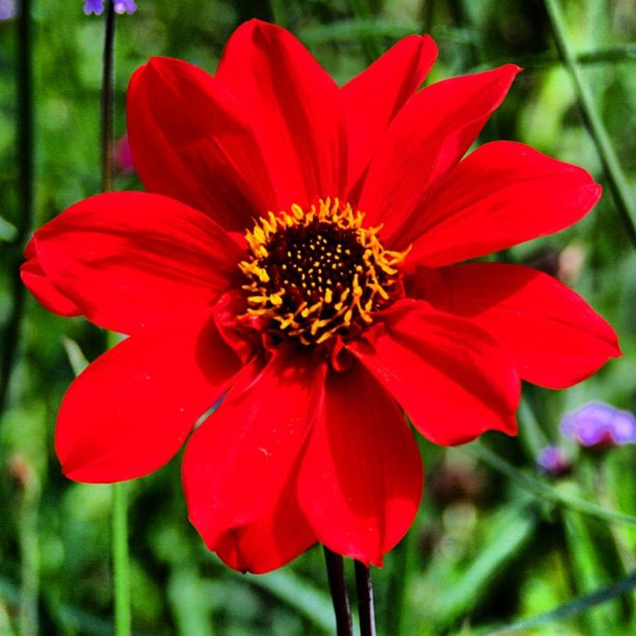 Red Photograph - Red flower by Luisa Azzolini