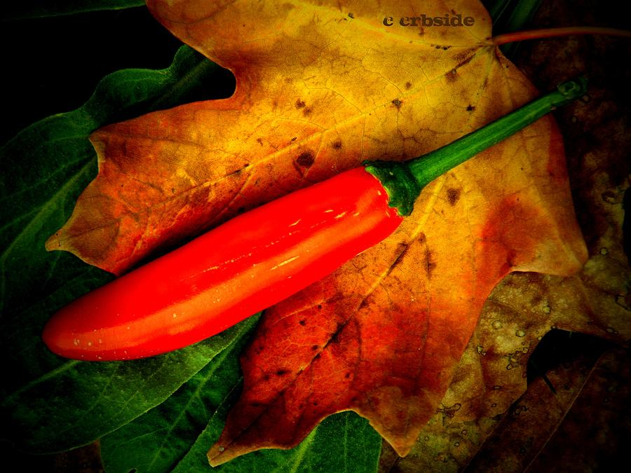 Peppers Photograph - Red Hot Chili Pepper by Chris Berry