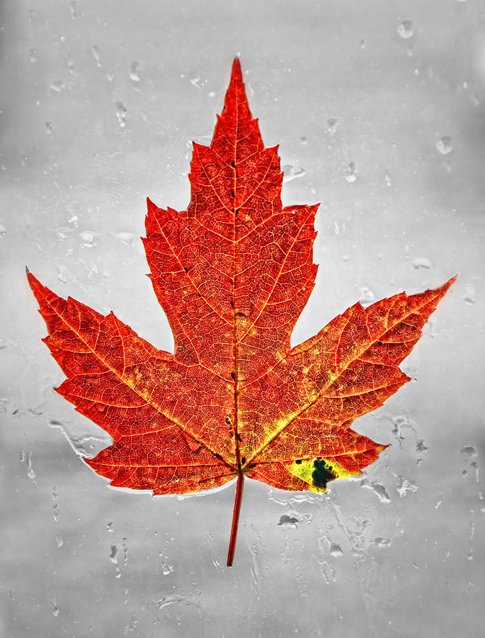 Red Leaf Photograph - Red Leaf by Brian Mollenkopf