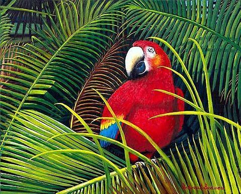 Macaw Painting - Red Macaw by Deborah Beaver