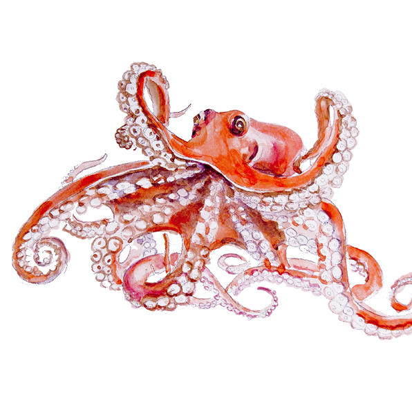 Red Octopus Painting By Elena Romanova