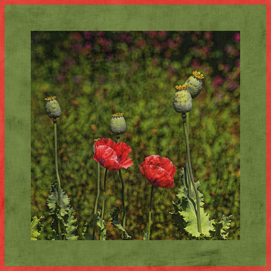 Poppies Photograph - Red Poppies by Bonnie Bruno