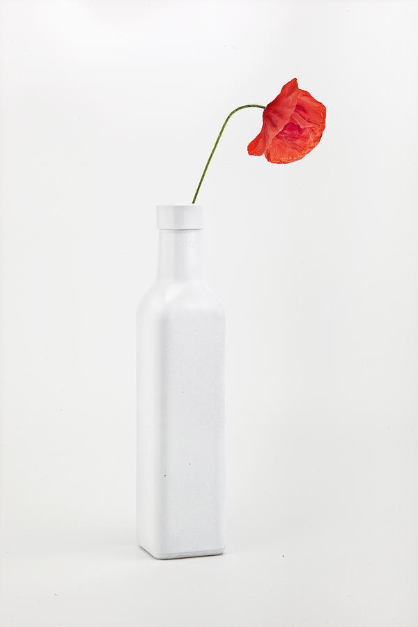 Vertical Photograph - Red Poppy Flower by Fausto Favetta Photoghrapher