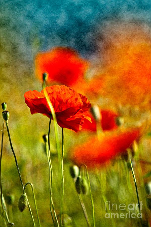 Poppy Painting - Red Poppy Flowers 01 by Nailia Schwarz