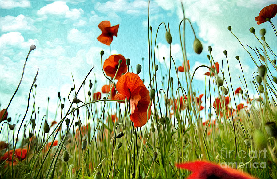 Poppy Painting - Red Poppy Flowers 03 by Nailia Schwarz