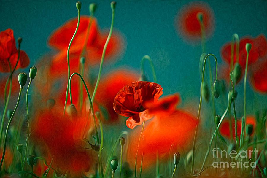 Poppy Painting - Red Poppy Flowers 05 by Nailia Schwarz