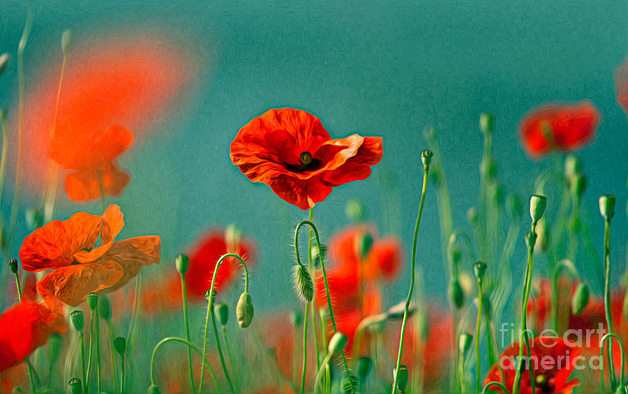 Red Poppy Flowers 06 Painting