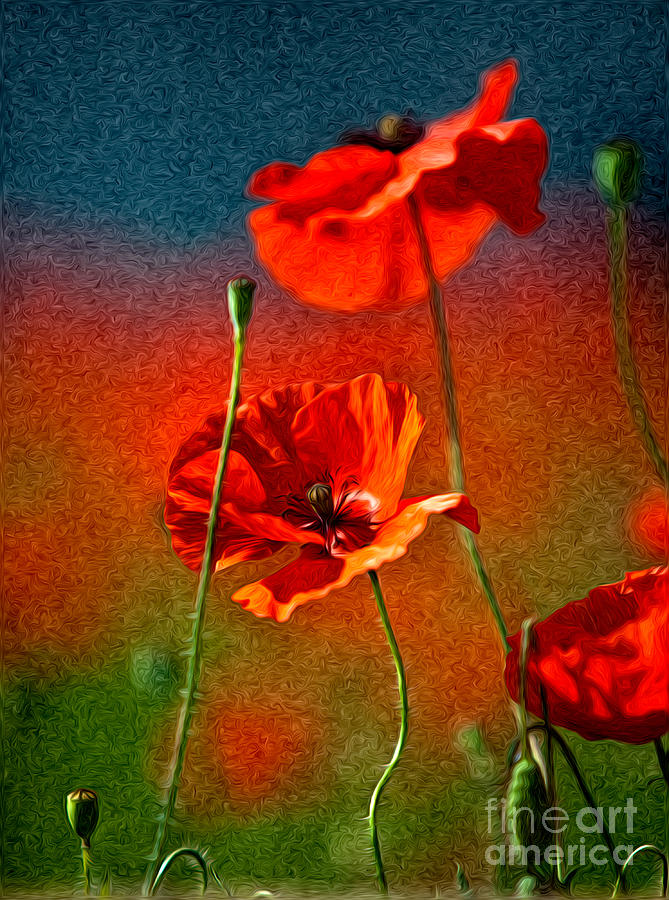 Red Poppy Flowers 08 Painting