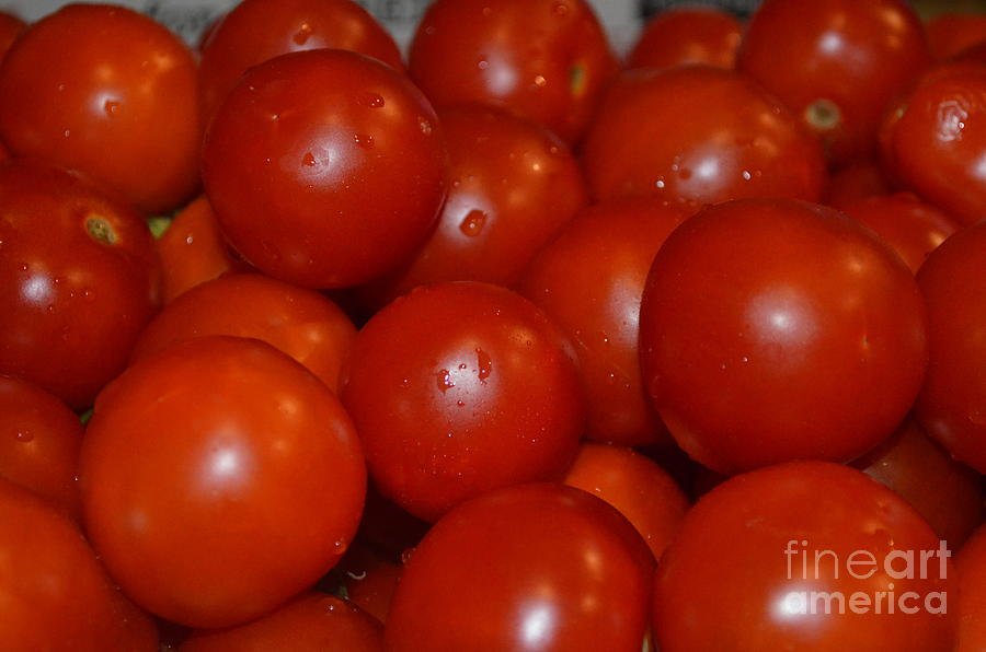 Tomatoes Photograph - Red Ripe And Round by Johanne Peale