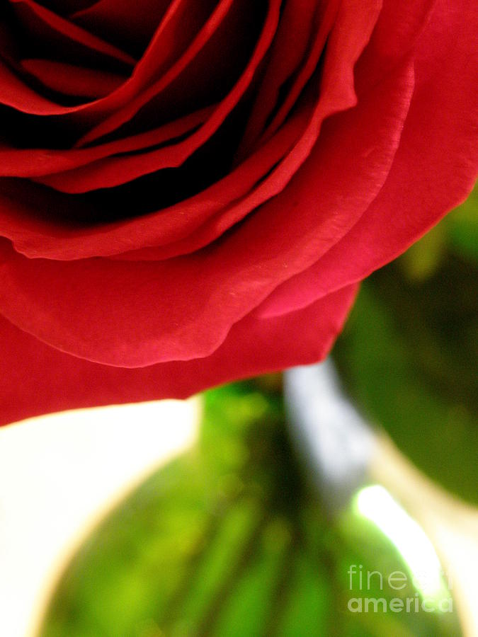 Rose Photograph - Red Rose In Glass Vase by Lainie Wrightson