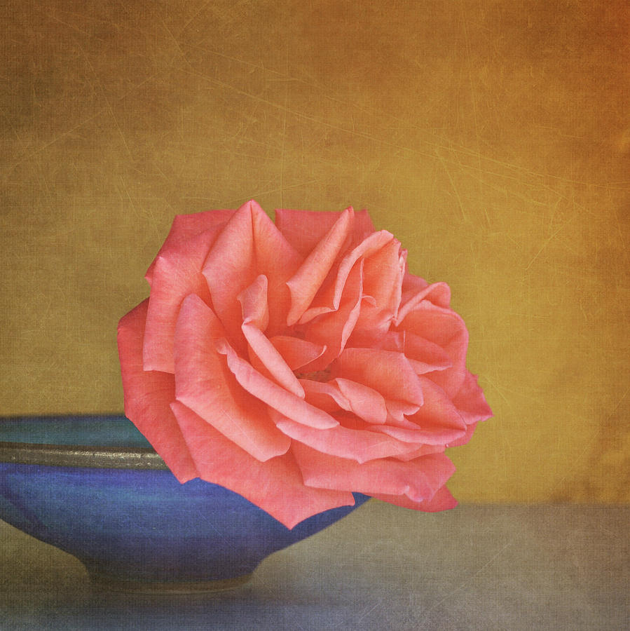 Square Photograph - Red Rose by Photo - Lyn Randle