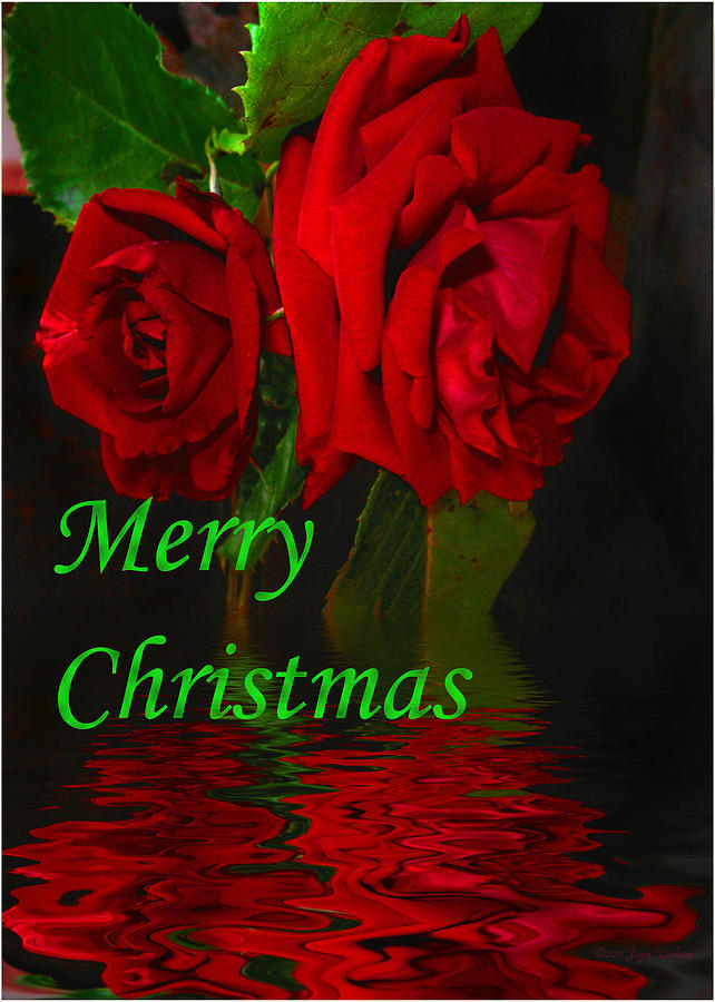 Red Rose Reflected Merry Christmas Photograph By Joyce