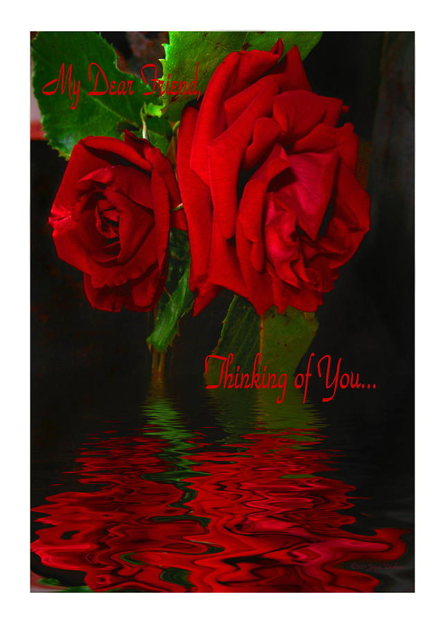 Red Rose Reflected Dear Friend Thinking of You Photograph ...
