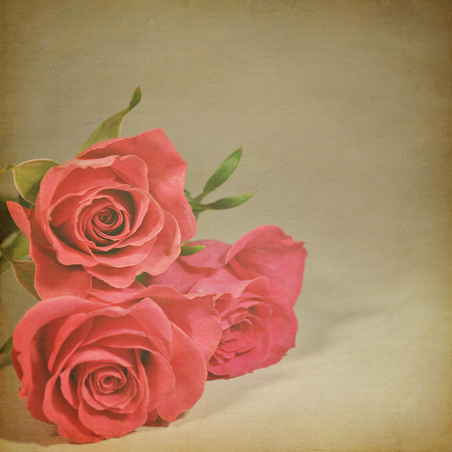 Square Photograph - Red Roses by Photo - Lyn Randle