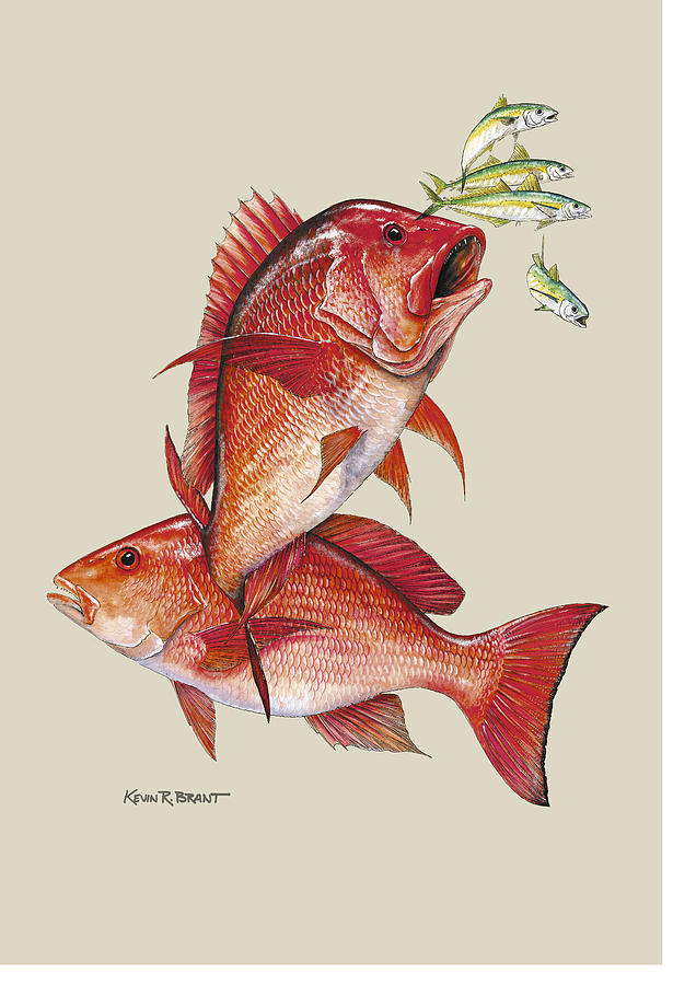 Snapper Painting - Red Snapper by Kevin Brant