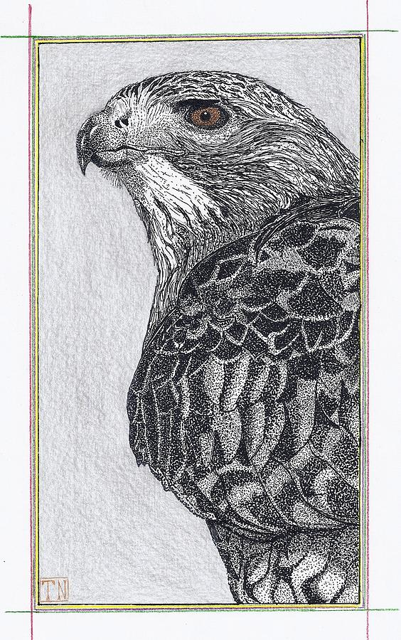 Framed Animal Prints Drawing - Red Tail Hawk Head Study by Tony  Nelson