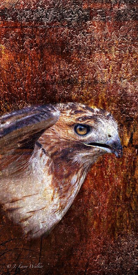 J Larry Walker Digital Art - Red-tailed Hawk by J Larry Walker