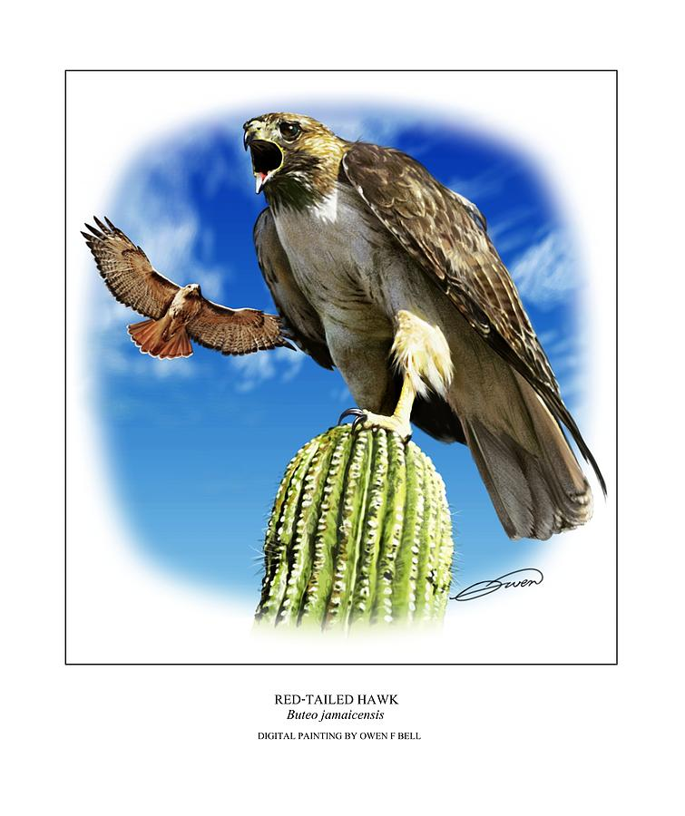 Red Tailed Hawk Digital Art - Red Tailed Hawk by Owen Bell