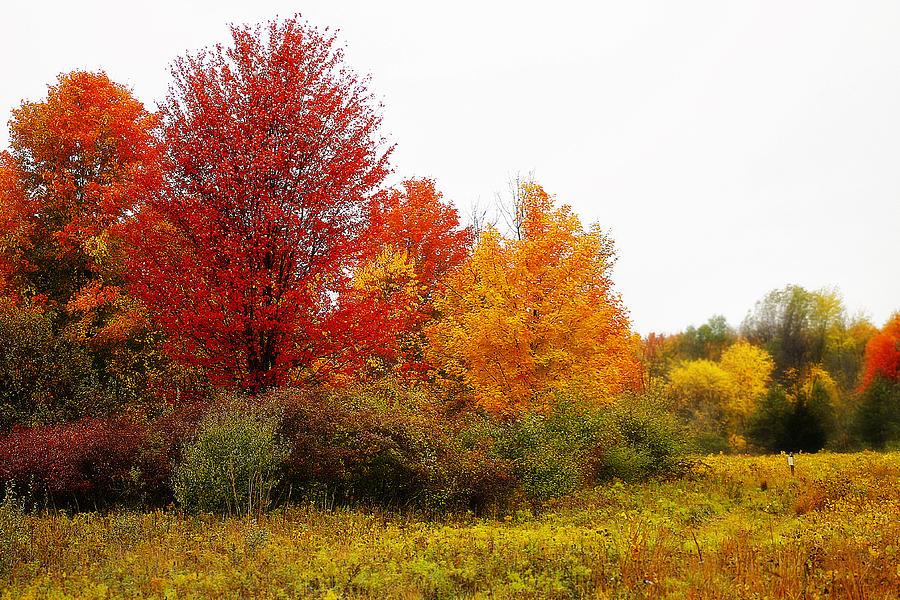 Hovind Photograph - Red Tree by Scott Hovind