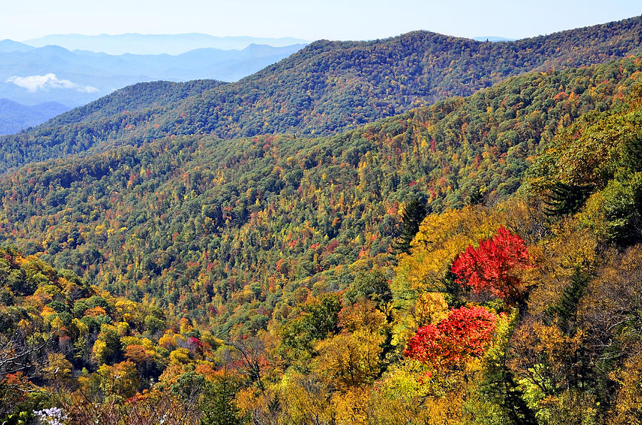Season Photograph - Red Trees  by Susan Leggett