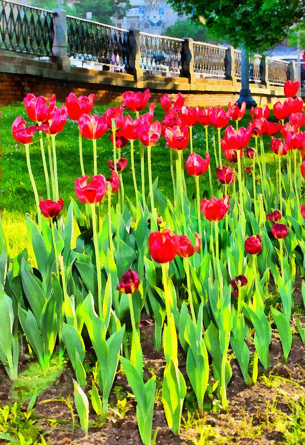 Background Photograph - Red tulips by Michael Goyberg