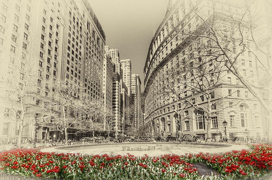America Photograph - Red Tulips by Svetlana Sewell