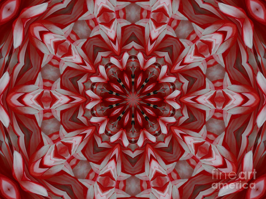Abstract Photograph - Reds by Paulina Roybal