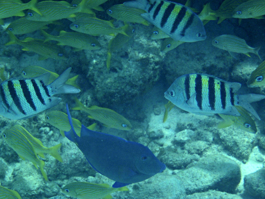 Fish Photograph - Reef Fish by Kimberly Perry