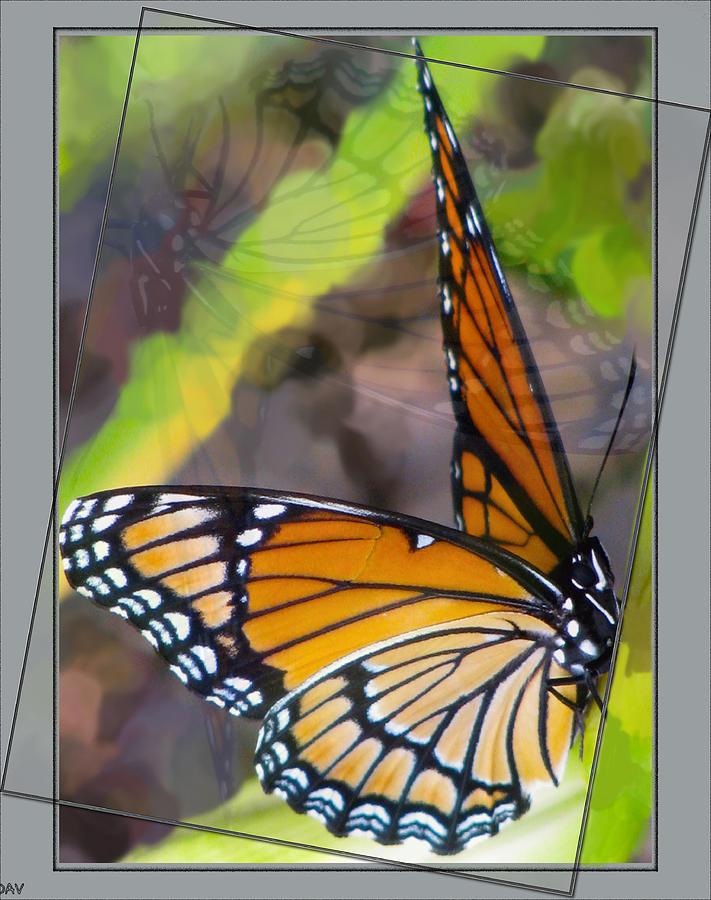 Butterfly Photograph - Reflection Back by Debra     Vatalaro