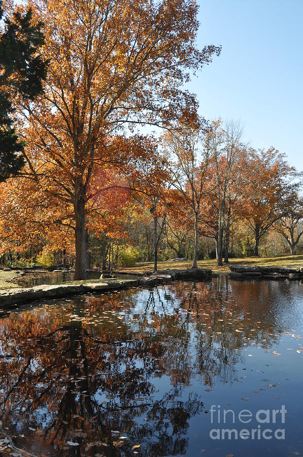 Cheekwood Gardens Photograph - Reflection In The Water by Denise Ellis