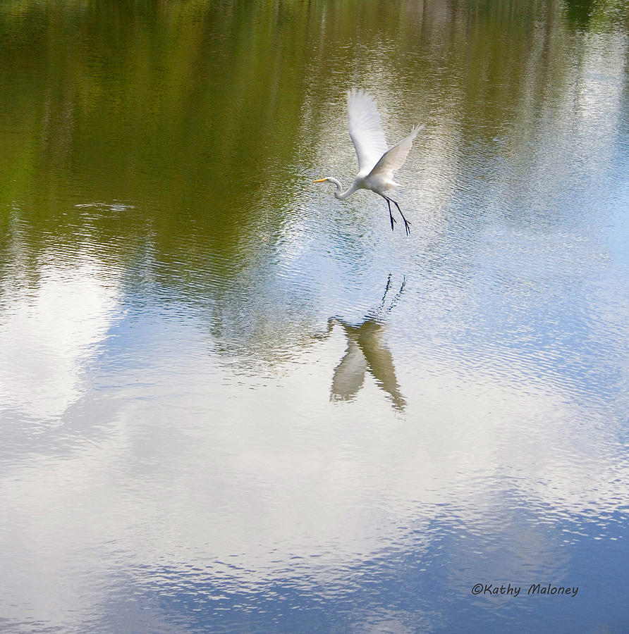 Reflection by Kathy Maloney
