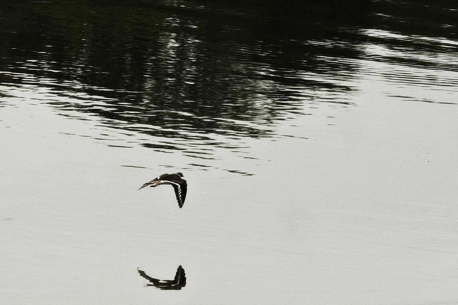Water Photograph - Reflection Of Flight by Douglas Barnard