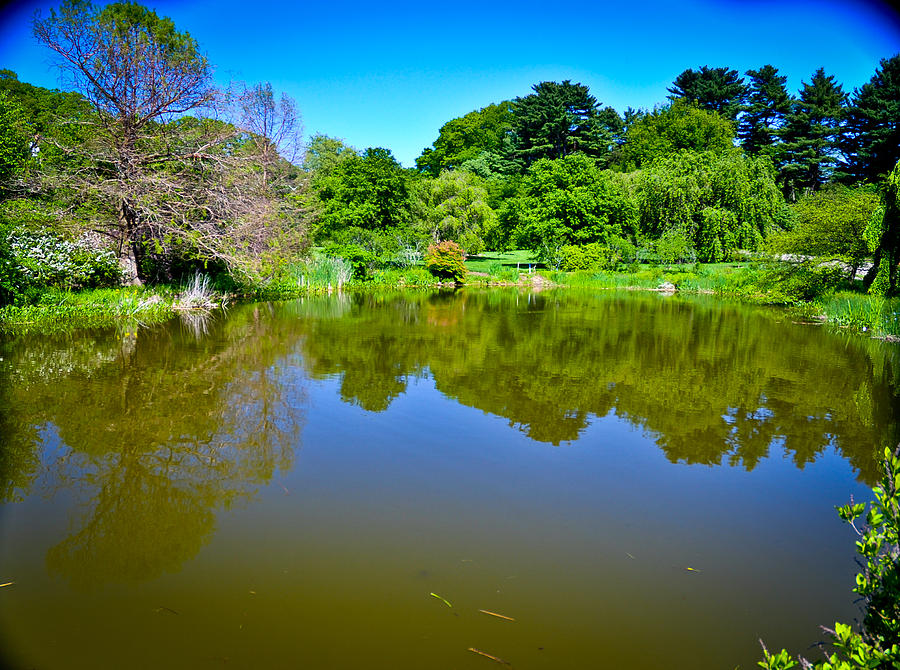Pond Photograph - Reflection Pond by Erica McLellan