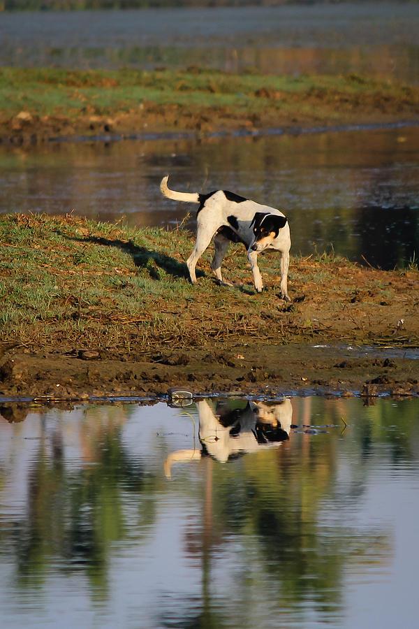Reflection Photograph