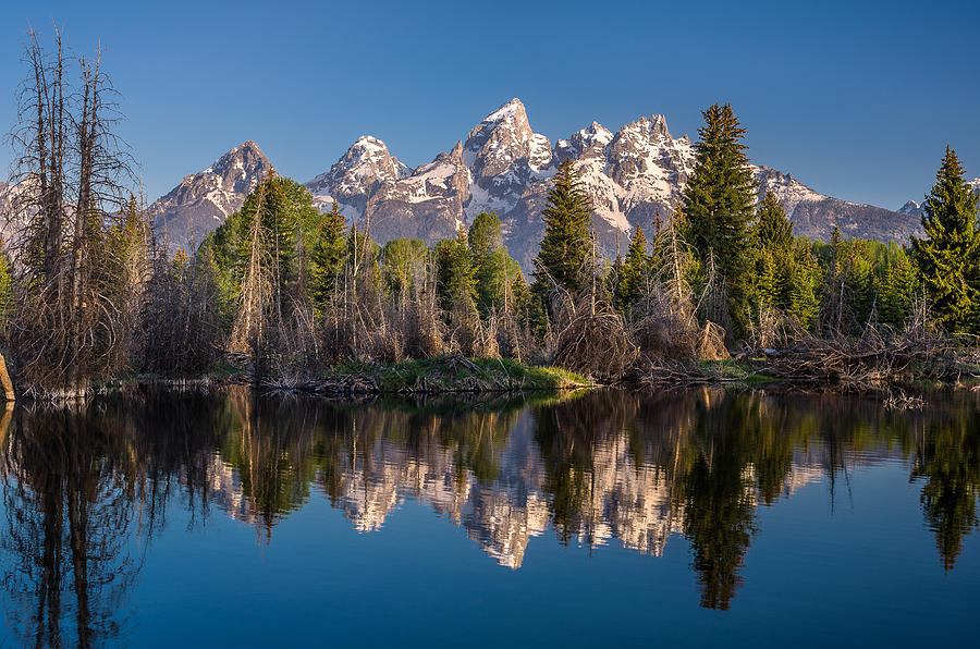 Grand Tetons Photograph - Reflections On Schwabacher Landing by Greg Nyquist