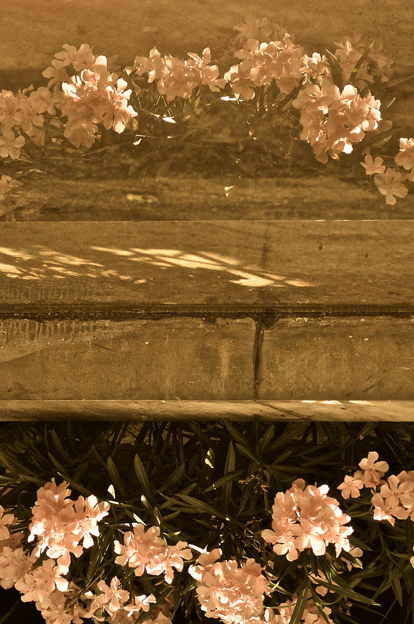 Sepia Photograph - Reflections by Rachel Rodgers