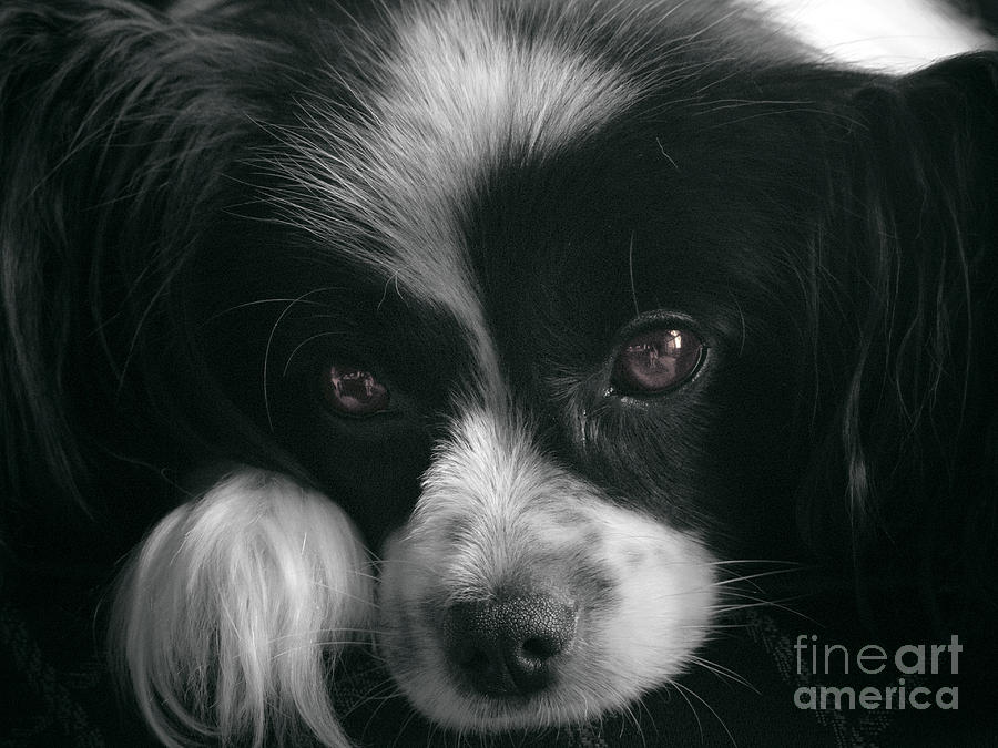 Dog Photograph - Reflective by Karen Lewis