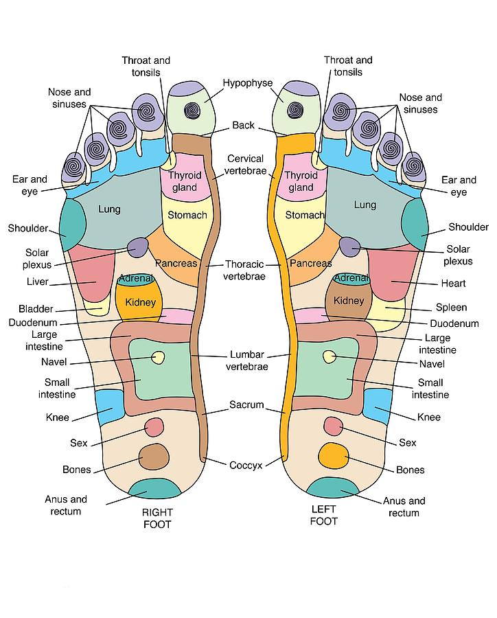 Reflexology Foot Map, Artwork on map china, map graphics, map drawings, map history, map clothing, map curtains, map food, map fabric, map cartoons, map books, map projects, map puzzle, map wallpaper, map postcards, map dishes, map services, map accessories, map design, map home decor, map social work,