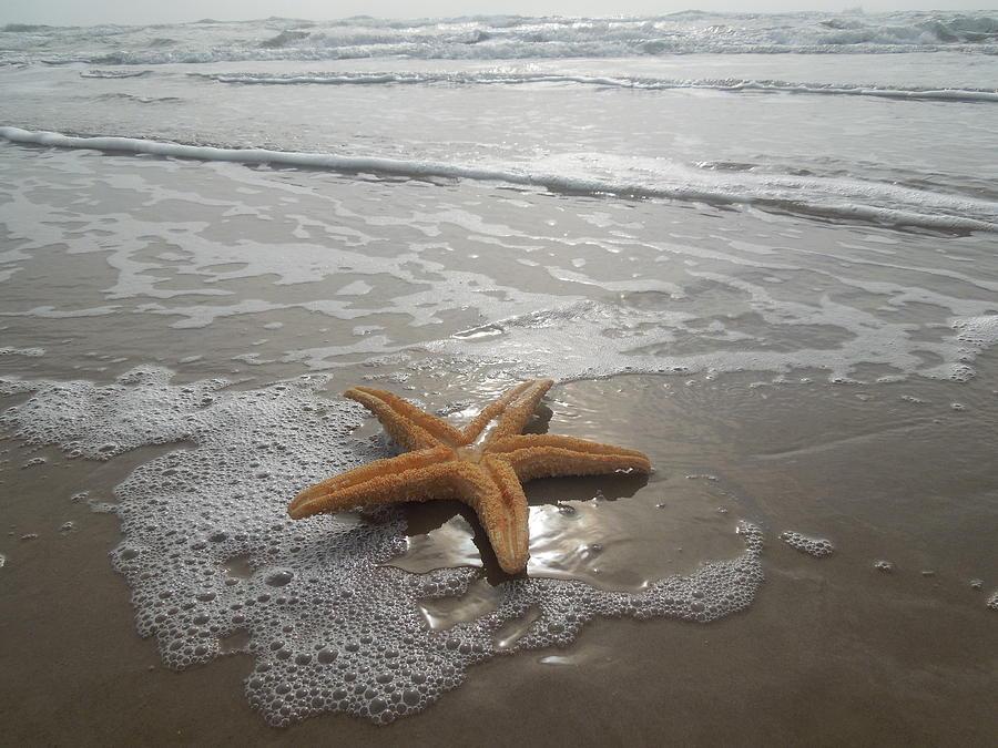 Star Fish Photograph - Relaxing Star Fish by Arturo Cabrera