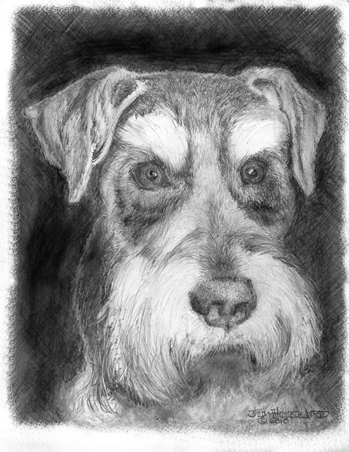 Miniature Schnauzer Drawing - Rescue Dog-kirby Minature Schnauzer by Jim Hubbard