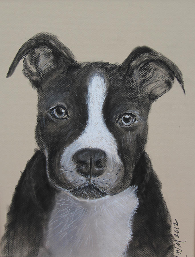 Pit Bull Drawing - Rescue Me  by Michelle Wolff