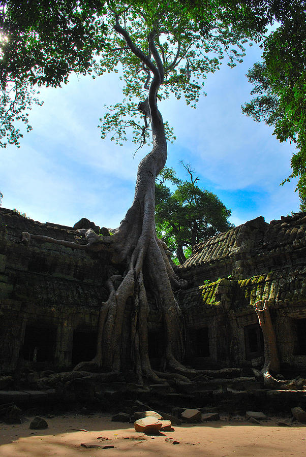 Tree Photograph - Resilience by Krystoff Ackerman
